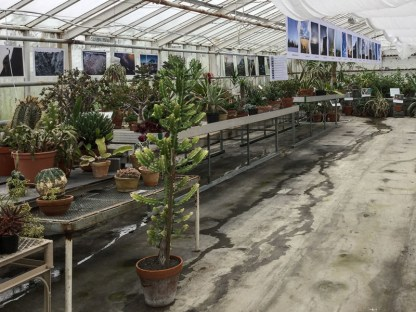 STEYPA - photographs between exotic plants in a greenhouse