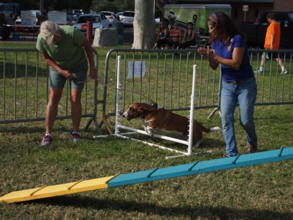 6th annual 'Dog Day Spectacular' offers benefit walk ...