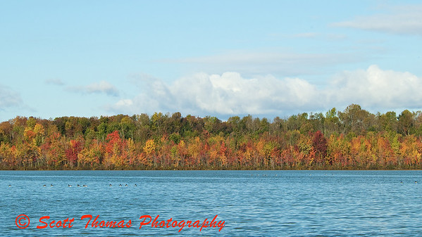 Trees along the shore of Beaver Lake near Baldwinsville, New York.