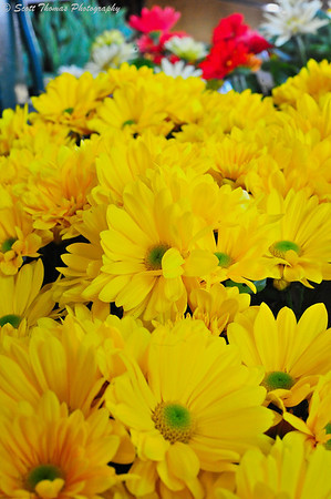 Yellow daisies brought smiles to many a customer at the Central New York Regional Market.