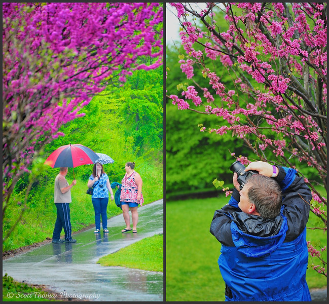 People found ways to enjoy the Lilac Festival in Rochester, New York despite the wet weather.