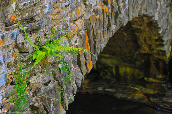 Fern clinging to the side of the stone bridge over the Central Cascade along the Gorge trail in Watkins Glen State Park, Watkins Glen, New York.