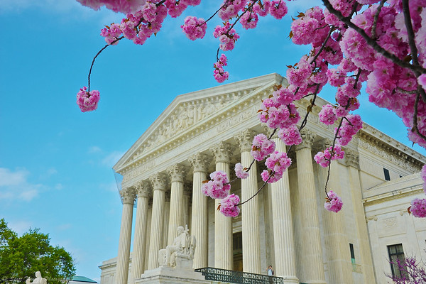 Flowering Dogwoods in front of the Supreme Court in Washington, DC.