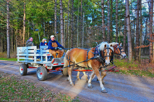 Cooperstown Carriage Company gave complimentary wagon rides during the Onondaga Parks Open House at Highland Forest in Fabius, New York.