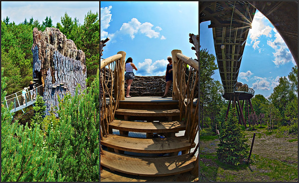 Scenes from the Wild Walk at The Wild Center in Tupper Lake, New York (from left to right): People walking into the Snag, people in the Eagle's Nest and a view from underneath the structure.