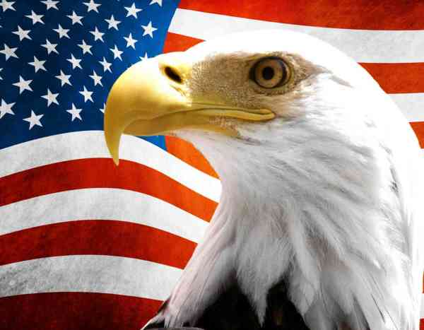 US Flag With Eagle Vinyl Sticker