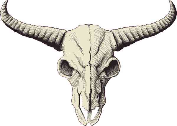 Buffalo Skull Bumper Sticker
