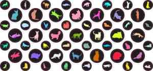 Colorful Cat Camera Dots®