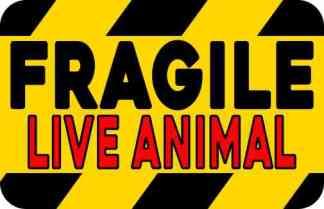 Red Fragile Live Animal Magnet