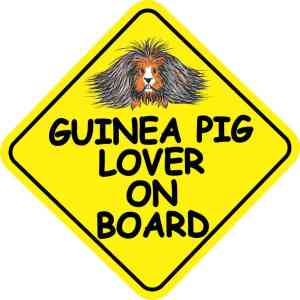 Long Haired Guinea Pig Lover on Board Sticker