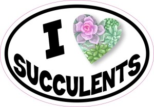 Oval I Love Succulents Sticker