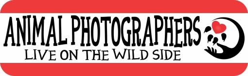 Animal Photographers Bumper Sticker
