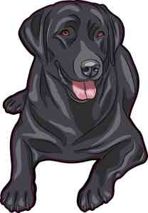 Black Labrador Retriever Sticker