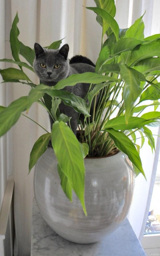 Miauw ... onze kat is een Jungle Animal! | Urban Jungle Bloggers | STIJLIDEE Interieuradvies en Styling
