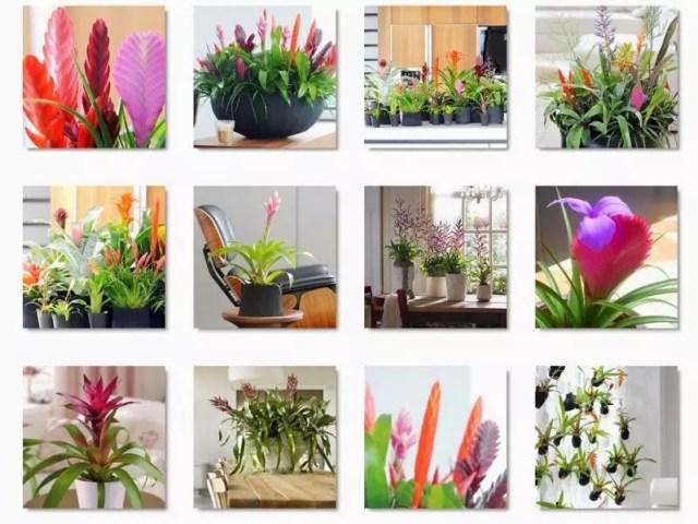 Interieur | Bromelia = woonplant van de maand November + DIY zelf Bormelia's kweken