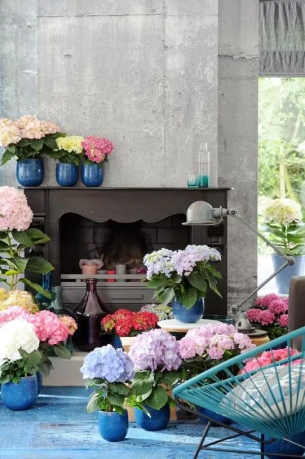 Interieur | Hortensia = Woonplant van de Maand maart