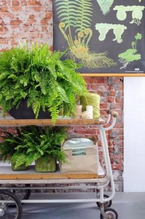 Interieur | Varen = Woonplant v/d Maand April