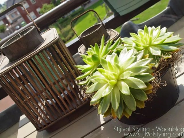 Echeveria -woonplant van de maand augustus door Woonblog www.stijlvolstyling.com