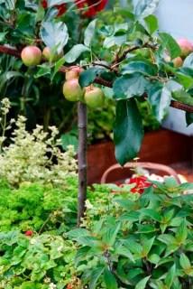 Buitenleven   De fruitboom = Tuinplant van de Maand augustus - www.stijlvolstyling.com