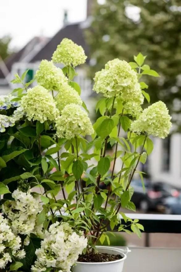Buitenleven | Comfortabel en luxe in eigen natuurtuin - Maak kennis met de tuintrends 2015 op Stijlvol Styling woonblog www.stijlvolstyling.com