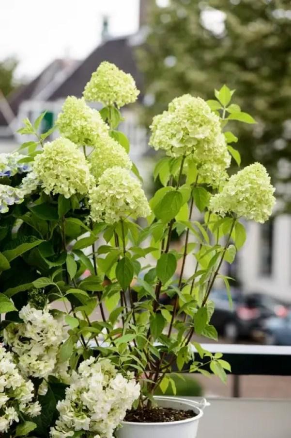 Tuintrends 2015 - Eco luxe - Maak kennis met de tuintrends 2015 op Stijlvol Styling woonblog www.stijlvolstyling.com