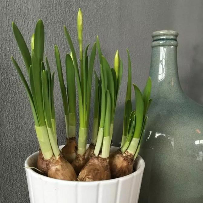 De #lente in huis gehaald!