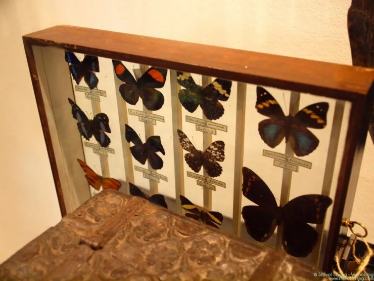 Interieurtrends | Insecten als decoratie- Stijlvol Styling woonblog - www.stijlvolstyling.com