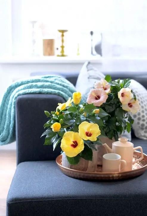 Groen wonen   Chinese roos (Hibiscus) = Woonplant v/d Maand mei - Stijlvol-Styling-Woonblog -www.stijlvolstyling.com