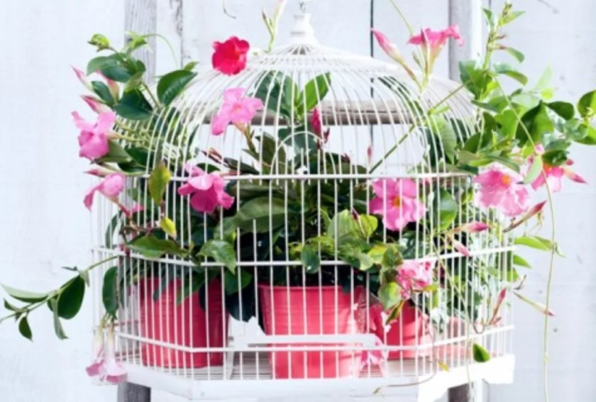 Tuintrends | x15 zomerse tuinplanten toppers - Stijlvol Styling - www.stijlvolstyling.com