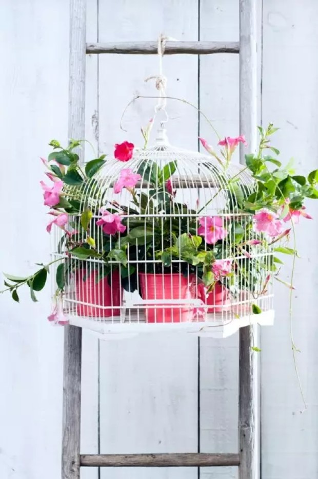 Tuintrends | 15 zomer tuinplanten toppers - Stijlvol Styling - www.stijlvolstyling.com