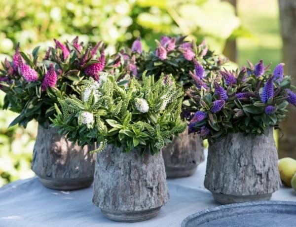 Buitenleven | Hebe = Tuinplant vd Maand Augustus - Stijlvol Styling woonblog www.stijlvolstyling.com