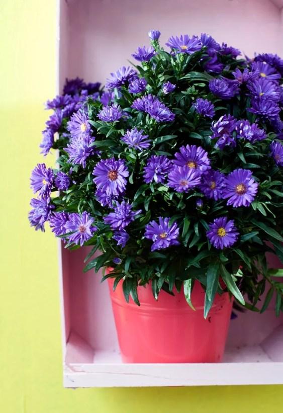 Buitenleven   9x de mooiste herfst tuinplanten - Woonblog StijlvolStyling.com
