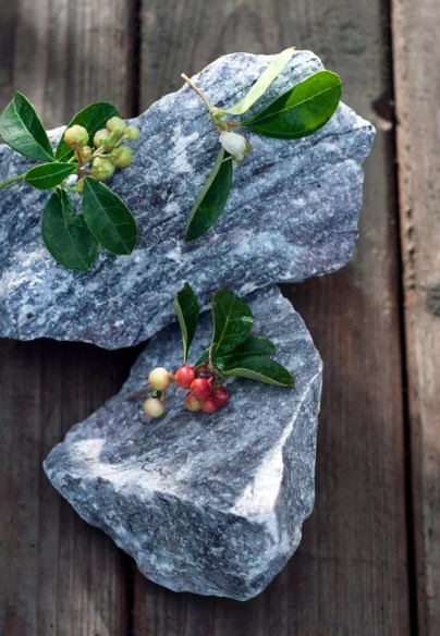 Bergthee in de herfst/ winter tuin | Buitenleven | De mooiste tuinplanten voor het najaar - Woonblog StijlvolStyling.com