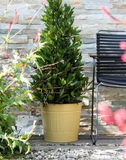 Laurier in de herfst tuin | Buitenleven | 9x de mooiste herfst tuinplanten - Woonblog StijlvolvolStyling.com