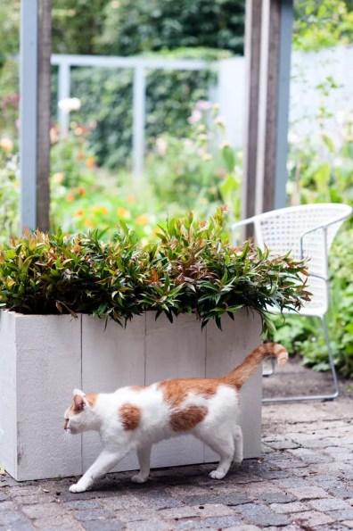 Leucothoe in de herfst tuin | Buitenleven | 9x de mooiste herfst tuinplanten - Woonblog StijlvolvolStyling.com