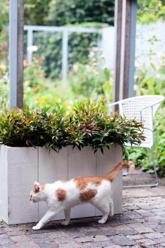 Leucothoe in de herfst tuin   Buitenleven   9x de mooiste herfst tuinplanten - Woonblog StijlvolvolStyling.com