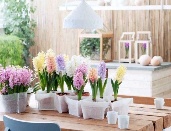 Groen wonen | Hyacint = Woonplant vd Maand december - Woonblog StijlvolStyling.com