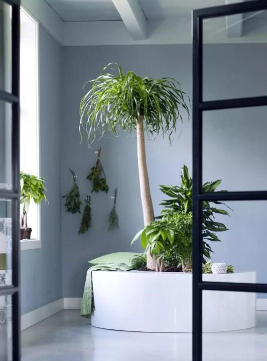 Groen wonen | Kamerboom = Woonplant vd Maand januari - Woonblog StijlvolStyling.com