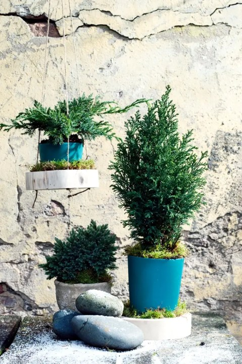Buitenleven   Kleur je tuin met coniferen. (Tuinplant van de Maand januari) - Woonblog StijlvolStyling.com