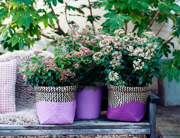 Buitenleven | Viburnum (Sneeuwbal) - Groene sneeuwpret in de tuin - Woonblog StijlvolStyling.com