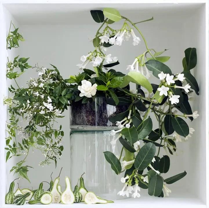 Groen wonen | Rijk geurende witte bloeiers - Woonblog StijlvolStyling.com (Parfum-plants with white flowers)