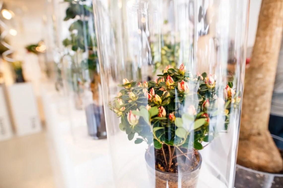 Binnenkijken | The Plant Agency pop-up Amsterdam - behind the scenes bij woonblog StijlvolStyling.com