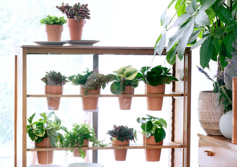 DIY | Van kastje naar planten kasje - Woonblog StijlvolStyling.com (Urban jungle vintage do it yourself with Peperomia)