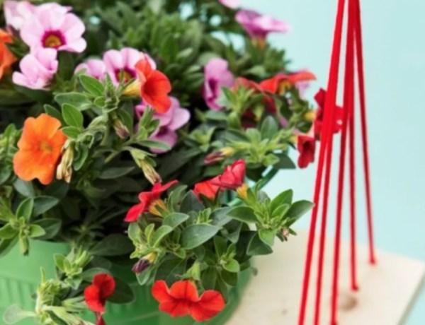 Buitenleven | Mini-petunia 'Tuintrompetjes voor vrolijke noot' - Woonblog StijlvolStyling.com (Calibrachoa garden flowers)