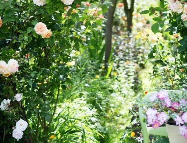 Buitenleven | Rozengeur en… zonneschijn - Woonblog StijlvolStyling.com