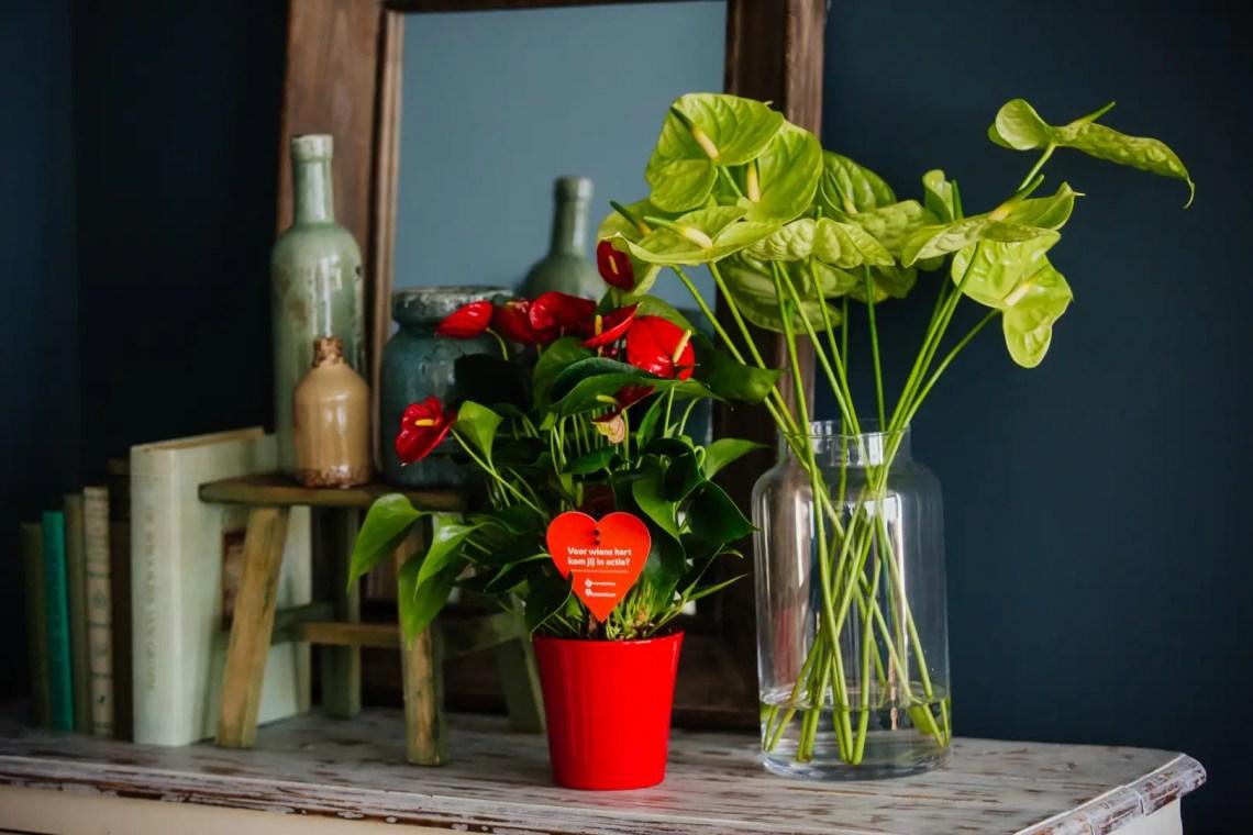 Groen wonen | 10 Stylingideeën met Anthurium - Woonblog StijlvolStyling.com