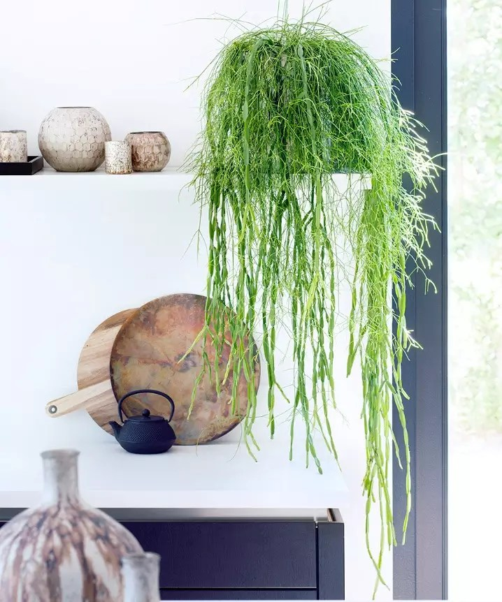 Groen wonen | Hangplanten als woontrend - Woonblog StijlvolStyling.com
