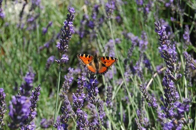 Buitenleven   Relaxen met Lavendel - Woonblog StijlvolStyling.com