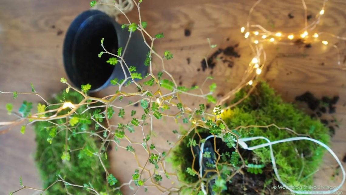 DIY   Kokodame met feestelijk tintje - Woonblog StijlvolStyling.com