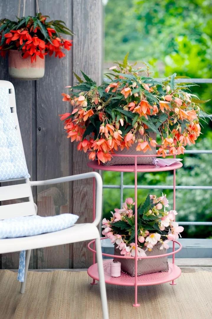Buitenleven | Hangbegonia - Balkonplant van het Jaar 2017 - Woonblog StijlvolStyling.com